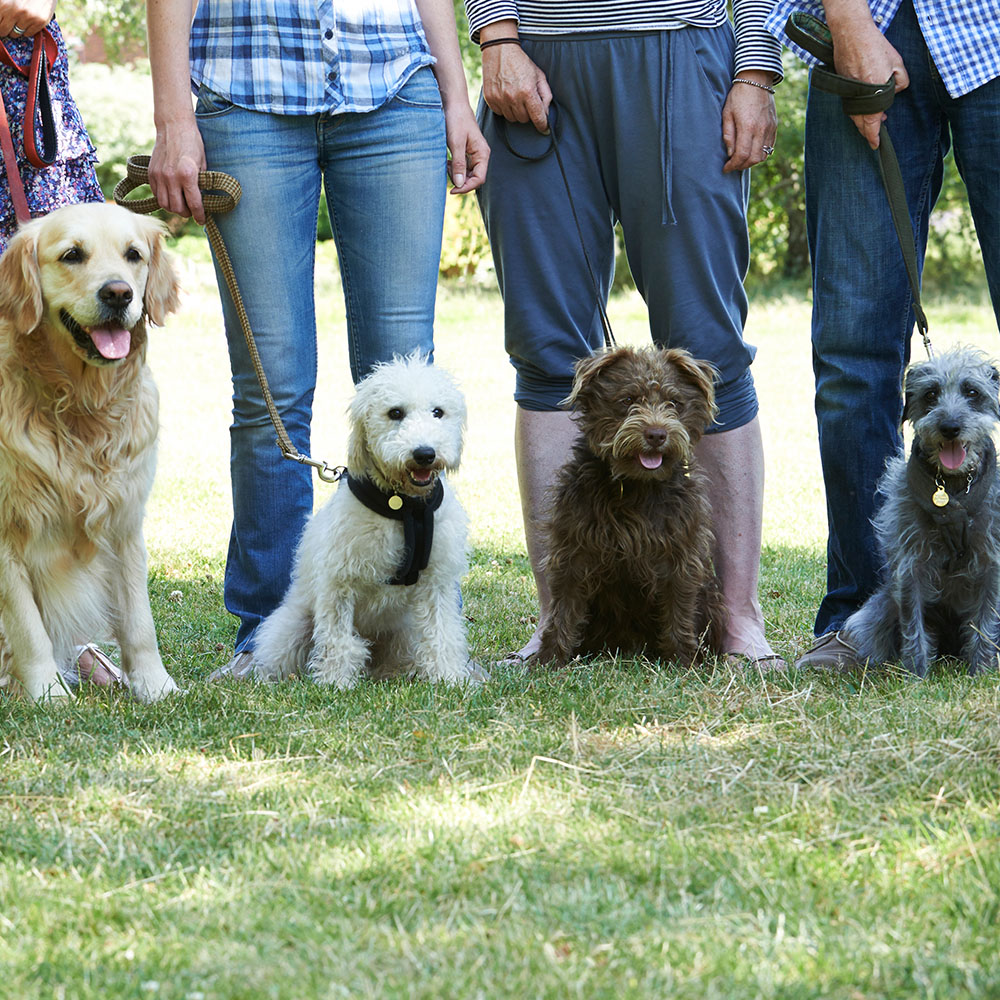 Owners and their dogs at a group dog obedience class