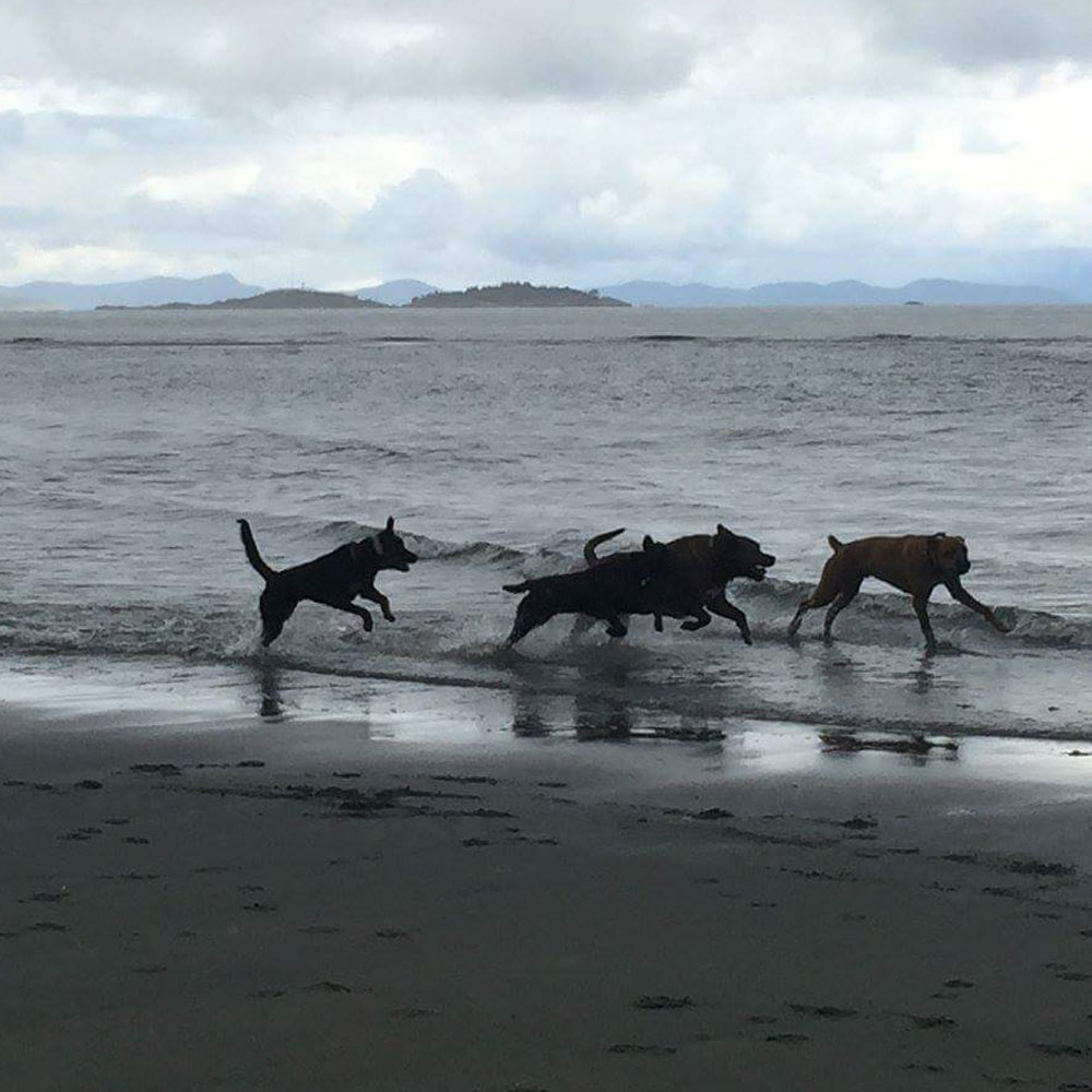 group of dogs playing on the beach